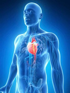 Testosterone Heart Attack Risk